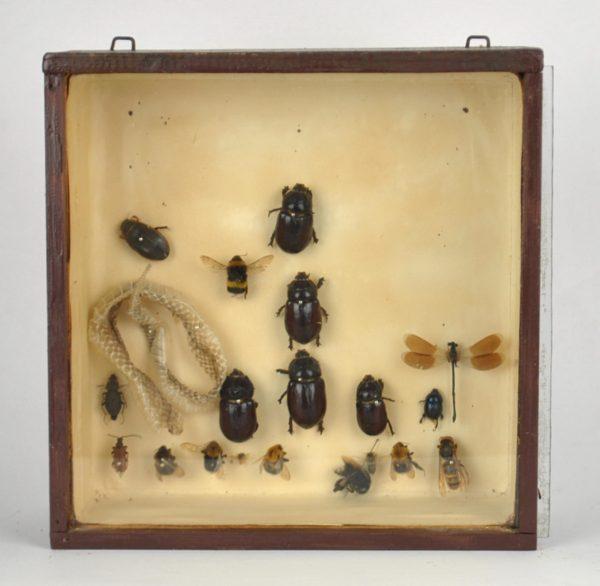 Putukate kollektsioon
